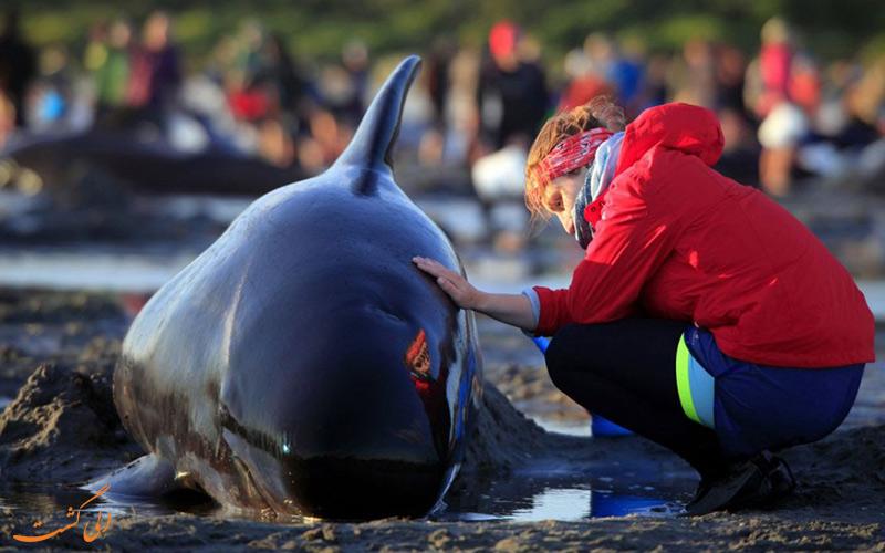 خودکشی دلفین ها- خودکشی دسته جمعی نهنگ ها