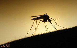 مقابله با نیش حشرات در سفر