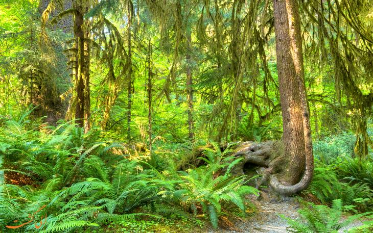 جنگل های حوزه اقیانوس آرام