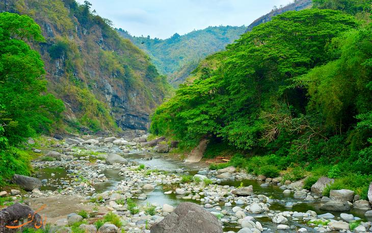 جنگل های جنوب شرق آسیا