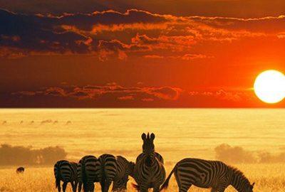 جاذبه های حیات وحش کنیا