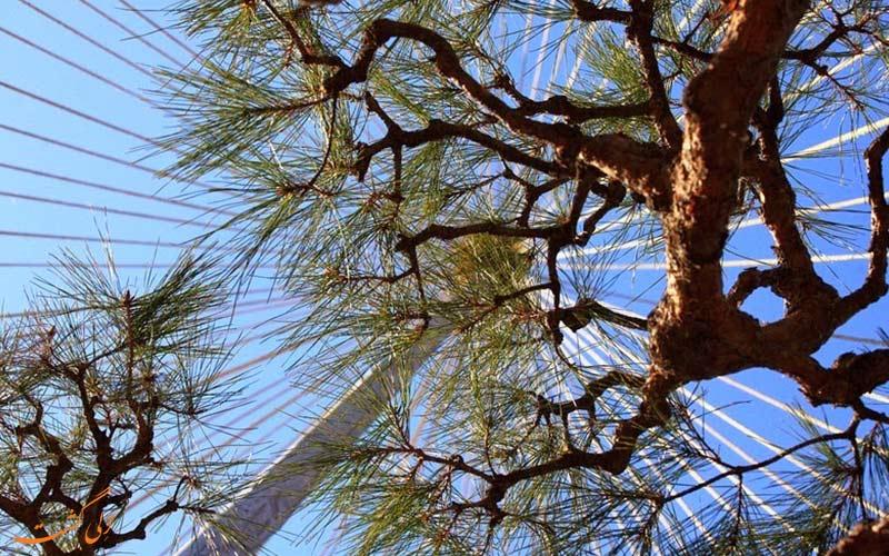 کلاه درختان