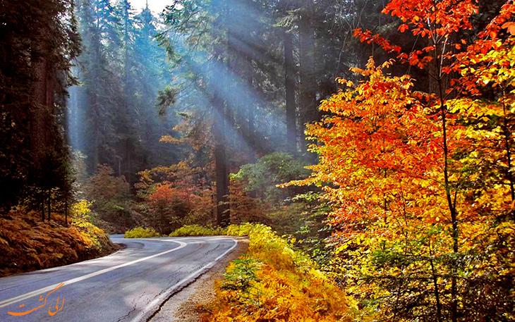 عکس های جنگل گیسوم در پاییز نارنجی-پارک جنگلی گیسوم