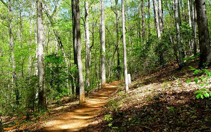 تصاویر جنگل گیسوم و مسیرهای پیاده روی-پارک جنگلی گیسوم