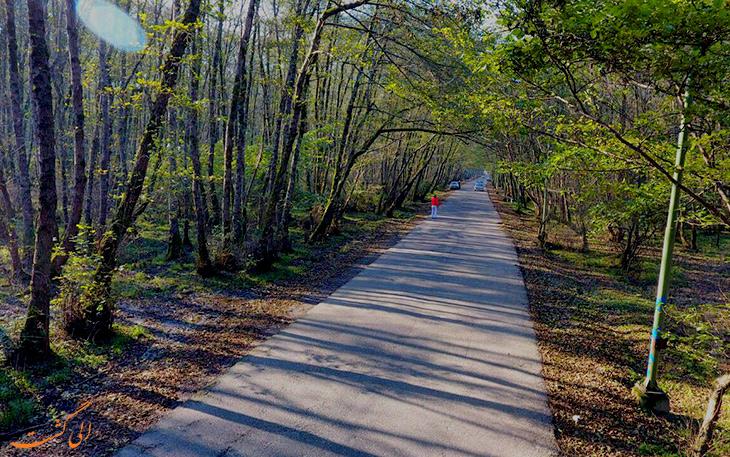 عکس جنگل گیسوم تالش-پارک جنگلی گیسوم