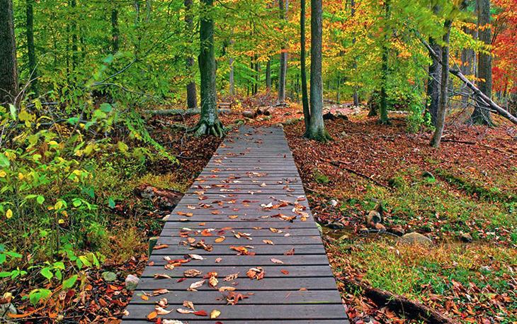 عکس جنگل گیسوم و مسیر پارک جنگلی گیسوم