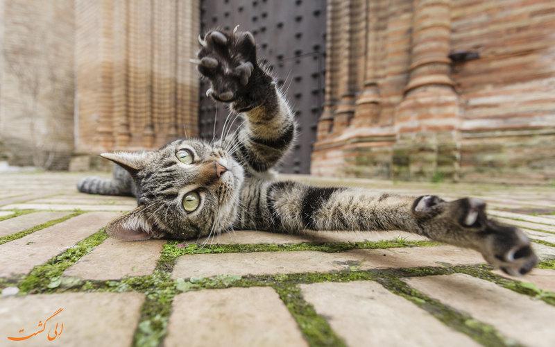 گربه خیابانی