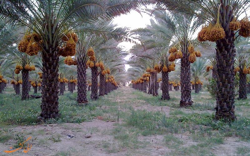 دشتستان