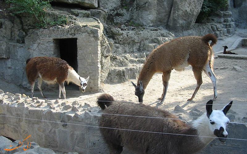 باغ وحش