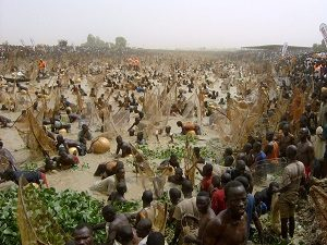 جشنواره ماهیگیری نیجریه