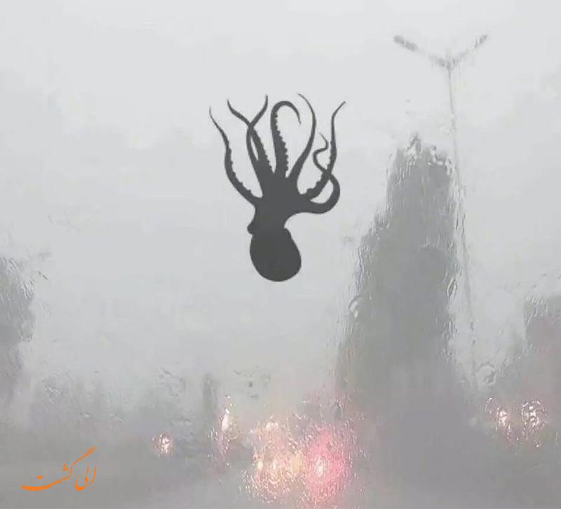 باران ماهی در چین
