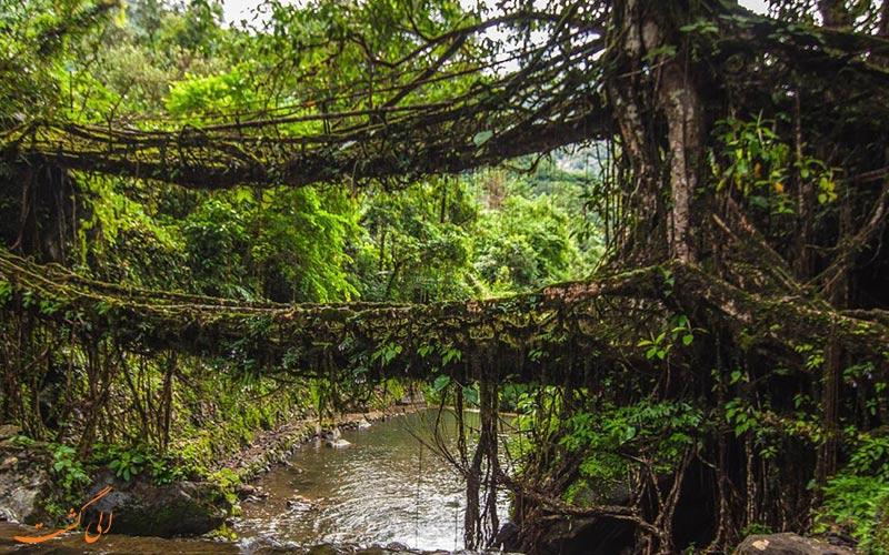 پل های طبیعی