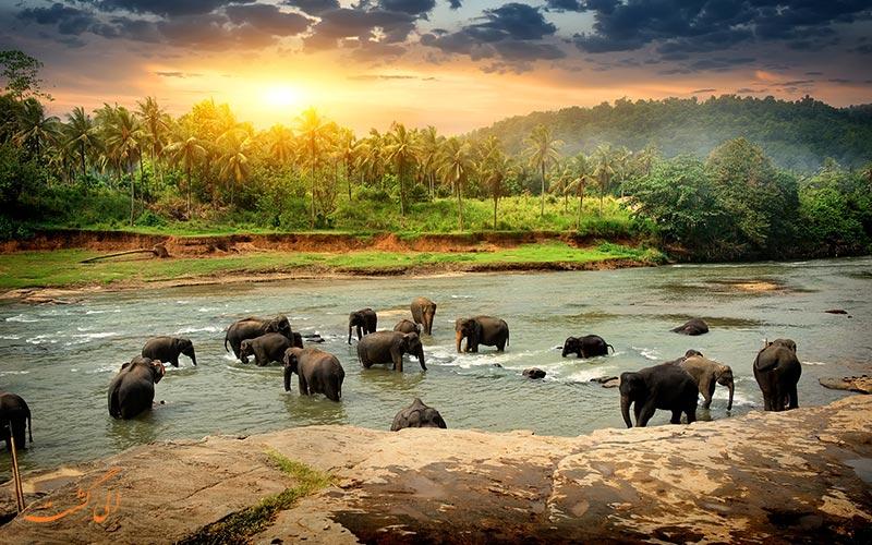 گروهی از فیل ها