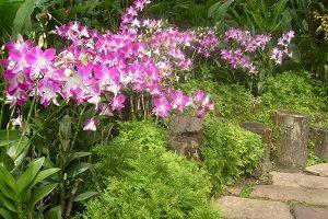 باغ ارکیده سنگاپور - الی گشت