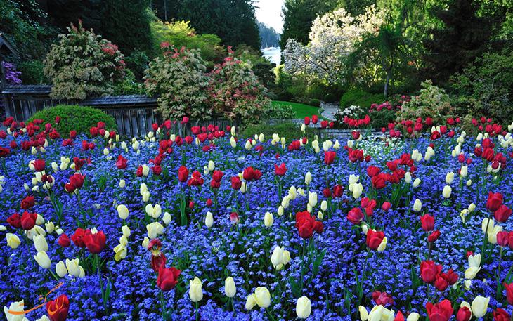 باغ های بوچارت در بهار