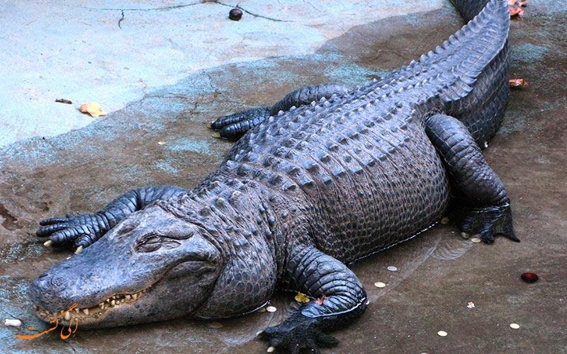 پیرترین تمساح دنیا