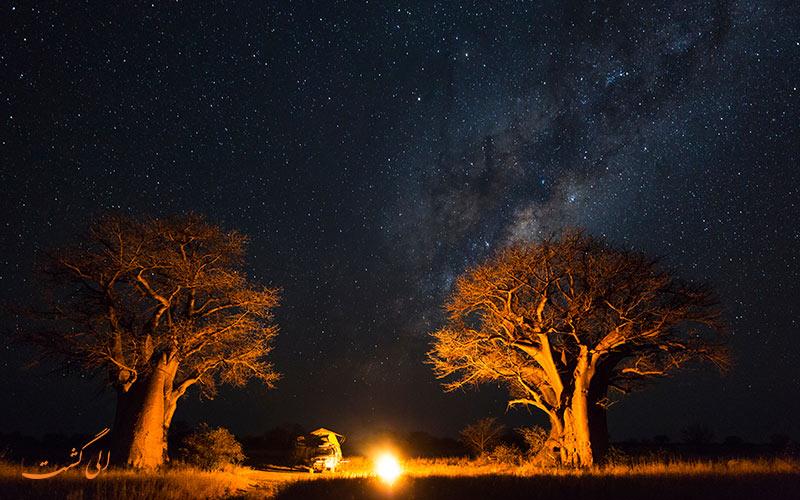 درخت بائوباب در شب