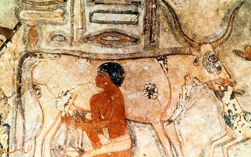 پنیر 3200 ساله در مصر