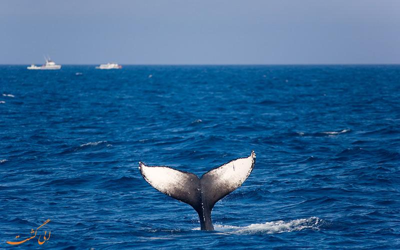 تماشای نهنگ