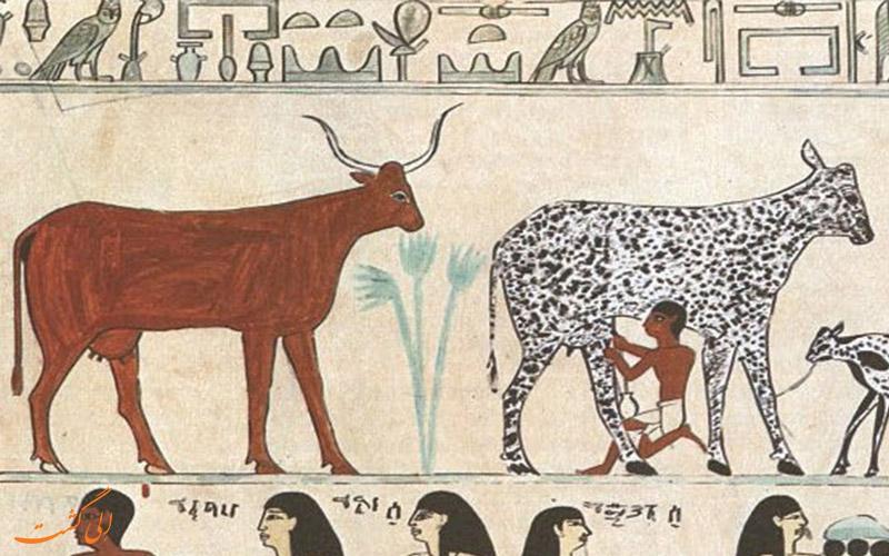 قدیمی ترین پنیر جهان
