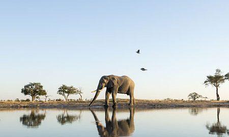 سافاری در بوتسوانا