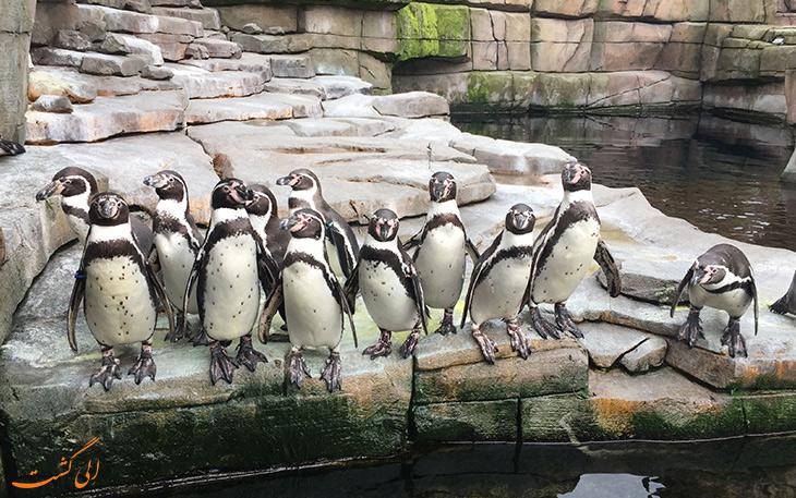 باغ وحش هامبورگ