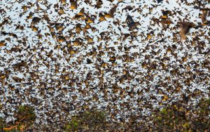 خفاش های پارک ملی کاسانکا