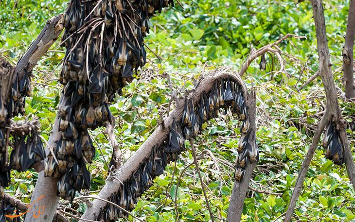 مهاجرت خفاش ها