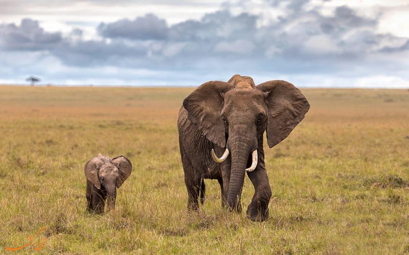 منطقه پنج بزرگ در تانزانیا