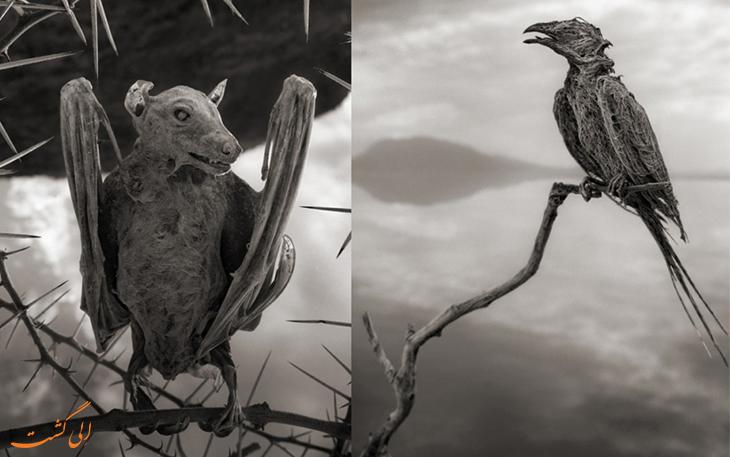 پرنده های سنگ شده