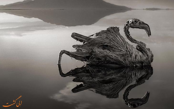 دریاچه ناترون