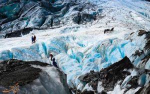 یخچال طبیعی فاکس