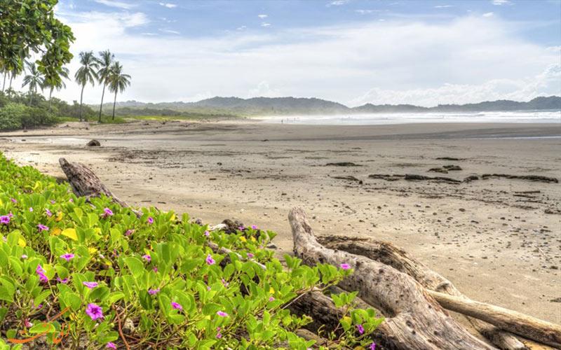 بهترین سواحل صدفی دنیا