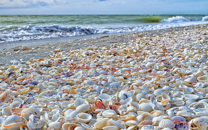 بهترین سواحل صدفی دنیا-فلوریدا
