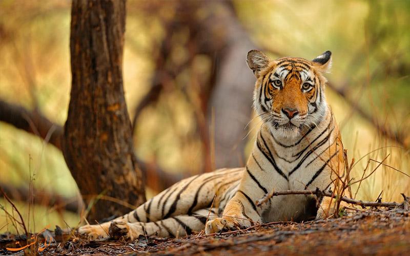 حیوانات حیات وحش هند
