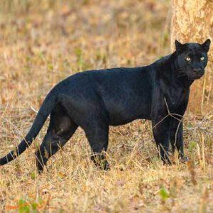 حیوانات حیات وحش هند-الی گشت
