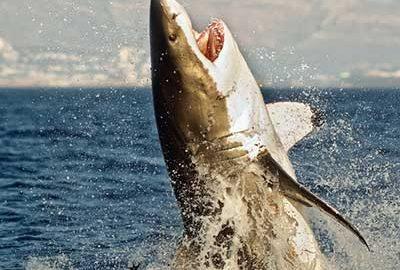 خطرناک ترین سواحل دنیا-الی گشت