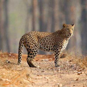تورهای عکاسی حیات وحش هند
