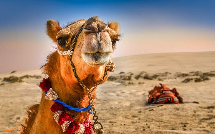 تورهای کویرنوردی در دبی