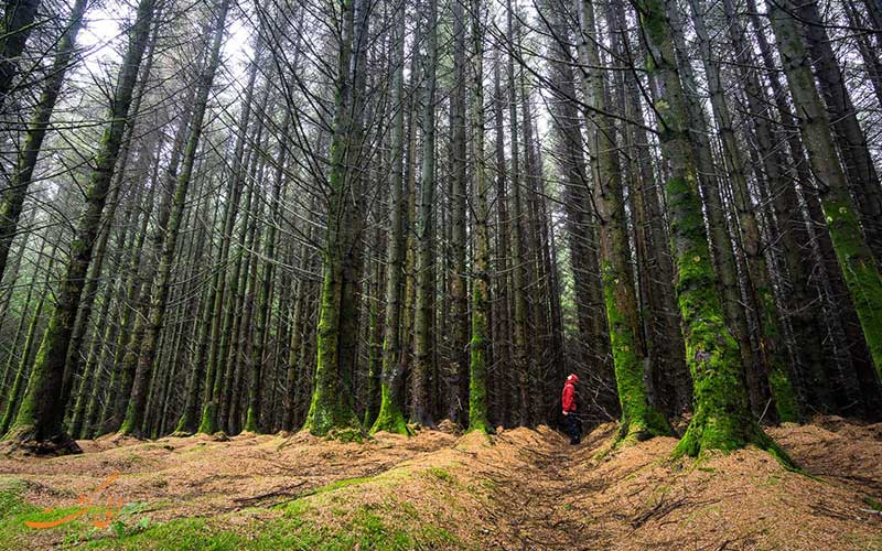 گم شدن در جنگل های انبوه