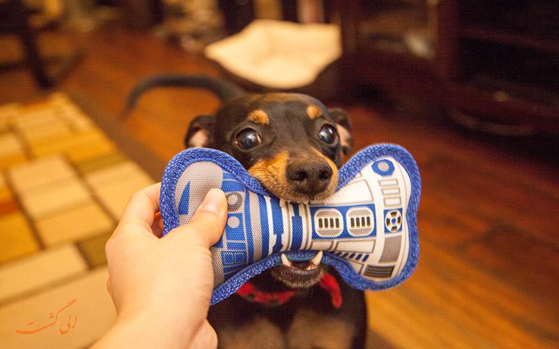 سگ گاز گیرنده