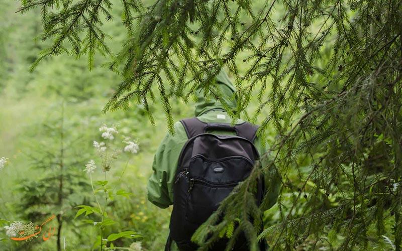 گمشده در جنگل