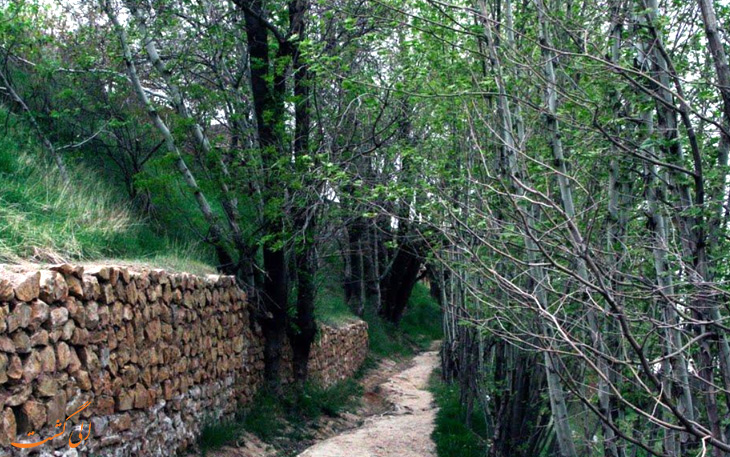 پوشش گیاهی روستای قلات