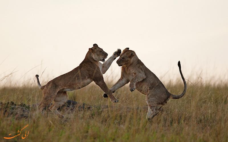 ماسایی مارا و سرنگتی، کنیا و تانزانیا