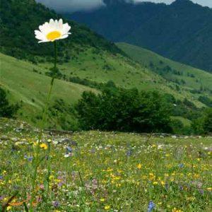 بهترین جاذبه های طبیعی گرجستان