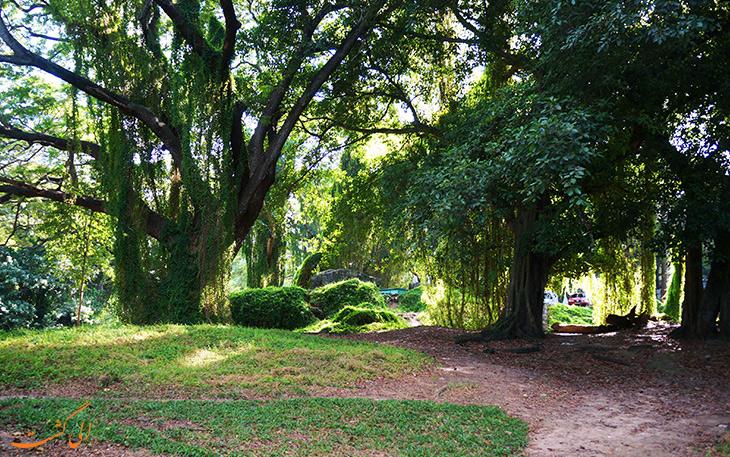 جنگل هاوانا