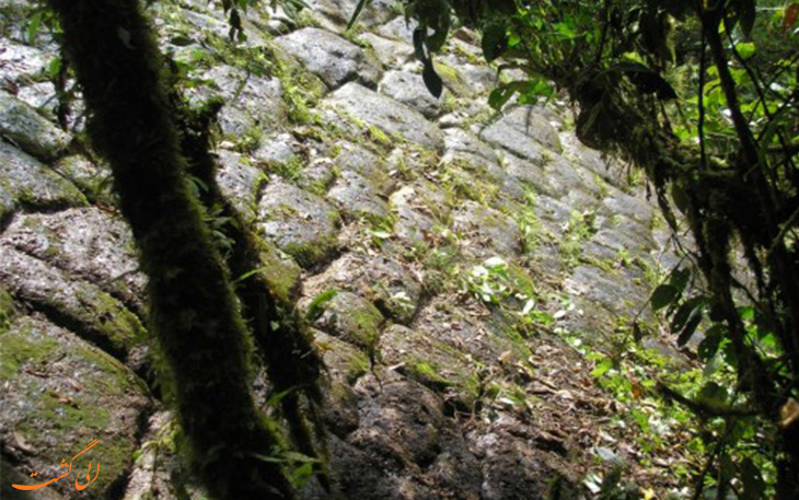 کشف اهرام در جنگل های آمازون