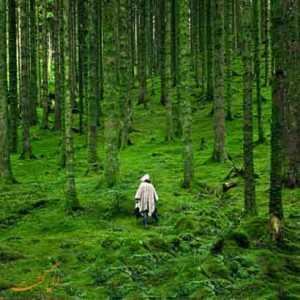 در جنگل گم شدن