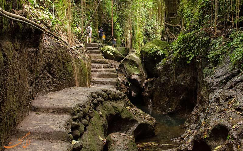 سفر به بالی در 5 روز-جنگل میمون ها