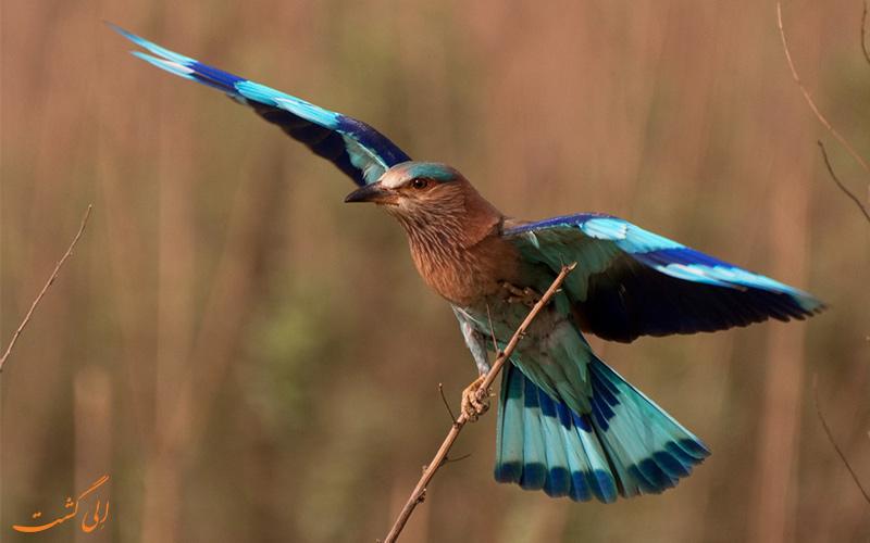 پرندگان هند-پارک